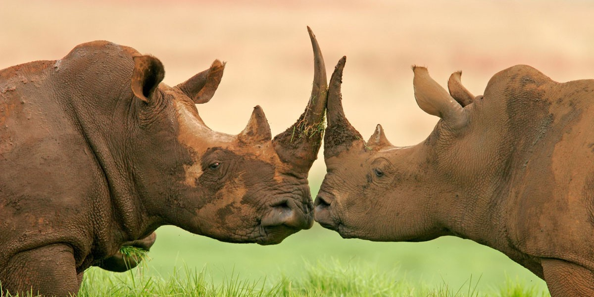 Rhino Foundation