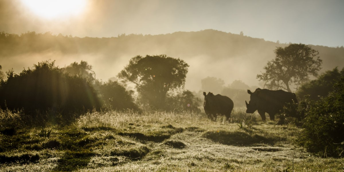 Rhino in the mist